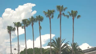 Palm trees and cloudy sky. Rooftop of building near plants. Spend summer in tropical paradise.