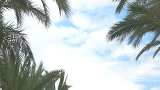 Palm trees and town building. Cloudy sky at daytime. Vacation at tropical resort.