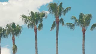 Palm trees on sky background. Tropical plants in the wind. Spend summer in exotic place.