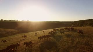 Aerial view of walking horses. Horseman in the distance. Where sun shines bright. Picturesque vasts of homeland.