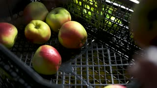 Apples in a crate. Ripe fruit close up.