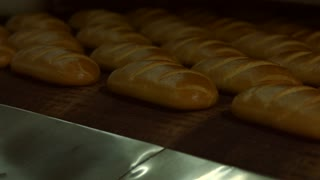 Automated production of bread. Conveyor with buns. French buns. Shop for baking of bread. Bread oven. A lot of bread in the oven.