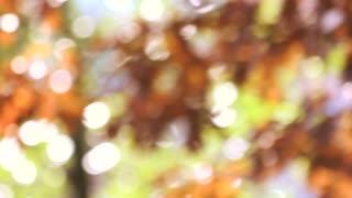 Autumnal natural bokeh. Blurred tree waving.