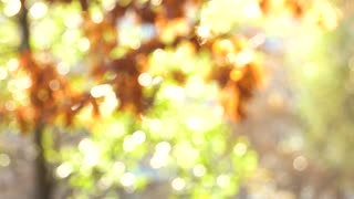 Beautiful nature, blurred background. Bokeh out of focus background from nature forest.