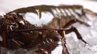 Big lobster moving his mouth. Live lobster laying on ice. It's looking right at you. Animal world sends greetings.