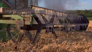 Blade of combine cuts ears. Harvester moving through field. New machinery is very reliable. Progress of technology in agriculture.