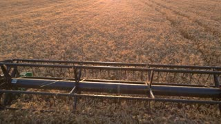 Blade of harvester cuts ears. Field of cereal. Agriculture needs modern machinery. New equipment gives better results.