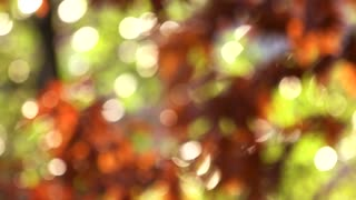 Blurred tree with leaves in orange. Forest blur background with windblowing.