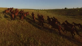 Brown horses are running. Horse herd and cloudless sky. Enjoy the freedom. All boundaries left behind.