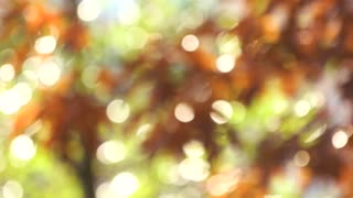 Colors of autumn, blurred leaves. Bokeh background of autumn leaves with windblowing.