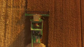 Combine harvester and golden field. Agricultural machine moving.