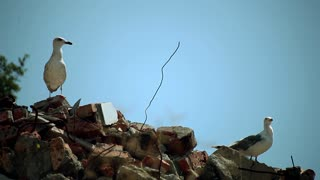 Cormorants sit on stones on sky background. Cormorants at the sea.