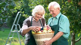 Couple of gardeners, apple basket. Old man and woman outdoors.