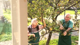 Couple of gardeners working. Old man with garden shears. Tree care tips.