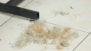 Dog fur on the floor. Pet hair clippings falling. Ways to recycle dog hair.