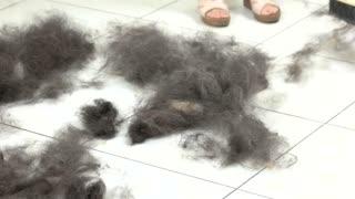 Dog hair on the floor. Push broom sweeping animal fur.