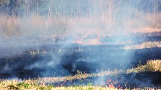 Dry grass burning in forest fire. Black field, burnt out grass.