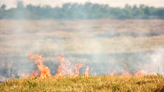Dry grass on fire. Accidental fire on the field in the summer.