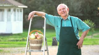 Elderly gardener showing thumb up. Smiling man and apple basket. Gardening business for beginners.