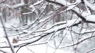 Fairy-tale forest. Winter forest. Beautiful winter. Trees in the snow.