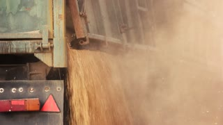 Falling grain from th truck, close up. Grain dust motion.