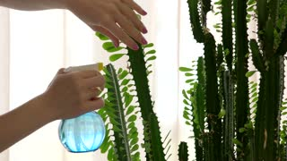 Female hand water spraying cactus. Green plant indoor. Guide to succulents.