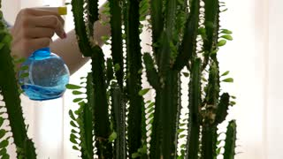 Female hand water spraying plant. Cactus close up. Easy care indoor plants.