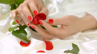 Female hands gently caress red rose. Young woman hands with beautiful manicure touching bud of red rose with tenderness and sensuality. Relax and pleasure concept.