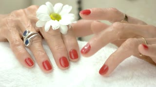 Female hands with flower after spa. Healthy and beautiful hands of old woman. Salon of beauty and spa.