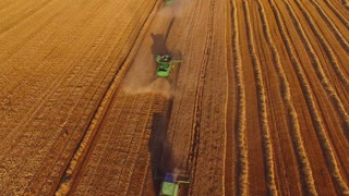 Field and combines, aerial view. Wheat field.
