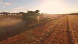 Field, sun and combine. Wheat field.