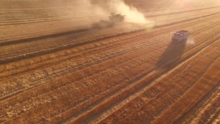 Field, truck and combine. Dust in the wheat field.