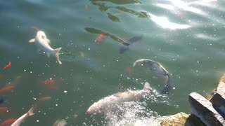 Fishes in water. Group of fish, motion. Fishing for beginners.