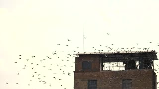 Flock of birds flying away, slow motion. Old abandoned building against sky background.