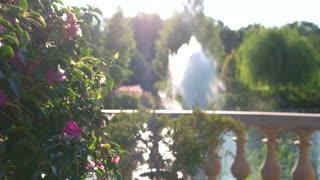Flowers on fountain background. Plant on the balcony. Basics of botany.