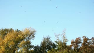 Flying birds above forest trees. Blue sky background.