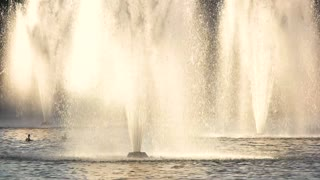 Fountains and ducks, slow-mo. Birds flying over the water. What is nature.