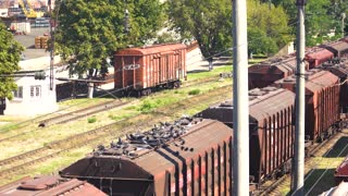 Freight trains on cargo terminal. Flock of pigeons and freight cargo trains.