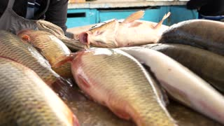 Fresh carp are sold on the market. Delicious fresh fish. Useful seafood.