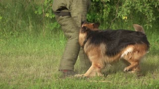 Furious hairy dog biting. Furious hairy dog biting a sleeve, slow motion.