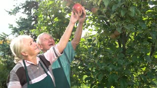 Gardeners near apple tree smiling. Happy old couple. From seeds to fruits.