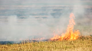 Grass burning in a wild bushfire outdoors. Fire in the field, burning dry grass motion.