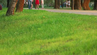 Green grass on crowded park. People walking and strolling in a park.