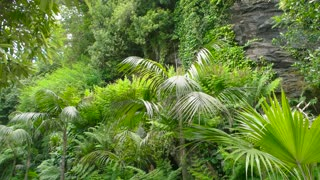Green plants and rock. Nature in summer. Tropical climate zone.