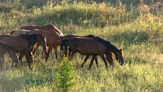 Group of horses eating grass. Animals on meadow. Ecology saves wildlife. Strong and free.