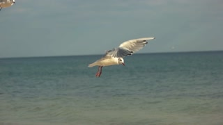 Gulls on sea background. Birds flying in slow motion. Wildlife and ecology studies.