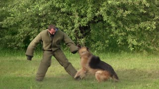 Hairy hound biting. Hairy hound cruelly biting man's sleeve, slow motion.