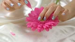 Hand tearing off gerbera petals, slow motion. Young woman hand with gentle manicure holding pink flower and tearing off its petals on white silk fabric.