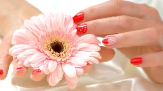 Hand touching gerbera, slow motion. Close up manicured hands of young woman caress gentle flower of peach color. Feminine care and beauty.