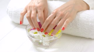 Hands in bowl with chrysanthemums. Female hands with fresh manicure soaking in aroma bath. Woman manicured hands receiving spa treatment.